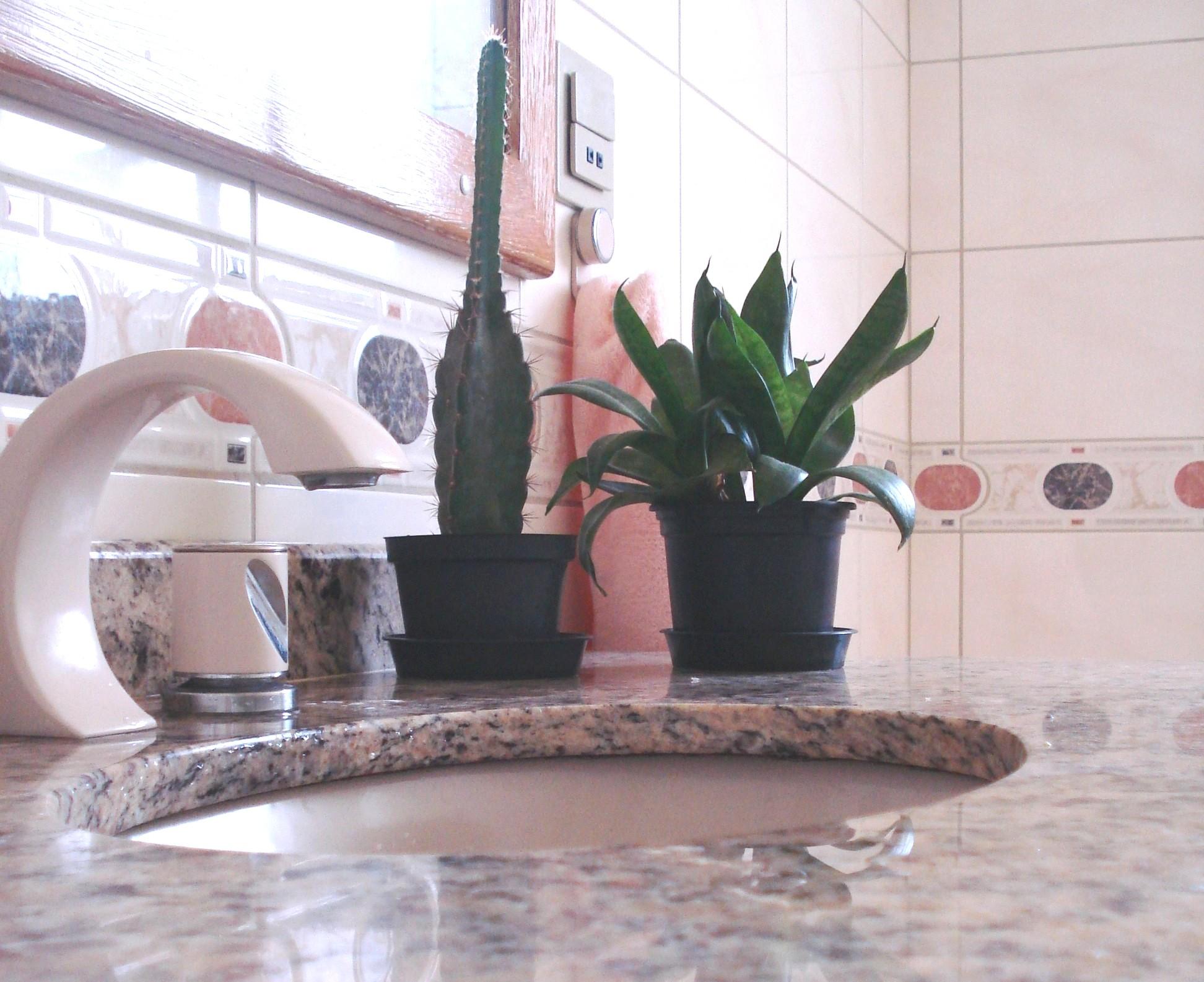 use plantas para energizar seu banheiro o banheiro é conhecido como o  #795C52 1944 1585